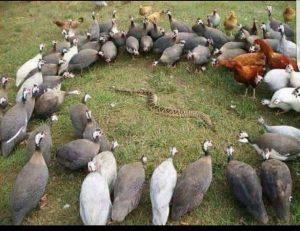 surround enemy